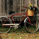 want cute bicycle
