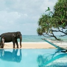 ▷ Holidays in Sri Lanka