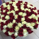 flowers (white and red roses)