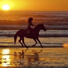 horsey ride on the beach