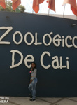 Zoo time*-*