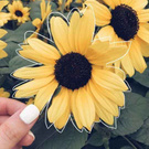 I want sunflowers when I wake up