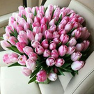 favorite tulips