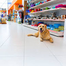 Pet store, spa and boutique