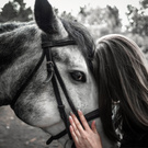 Horse – one of the first friends of man, the most loyal animal, and then the dog)